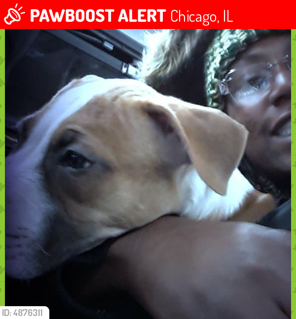 Lost Male Dog in Chicago, IL 60611 Named King (ID: 4876311