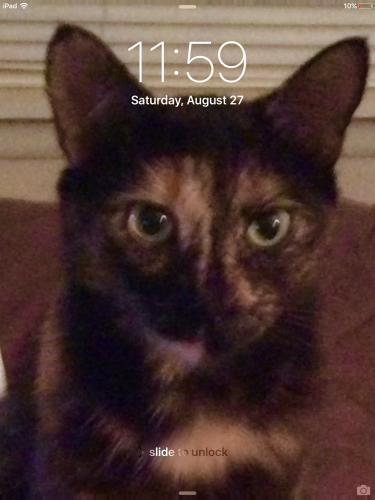 Lost Female Cat last seen Near Overhill Dr & Woodhue Dr, Manassas Park, VA 20111