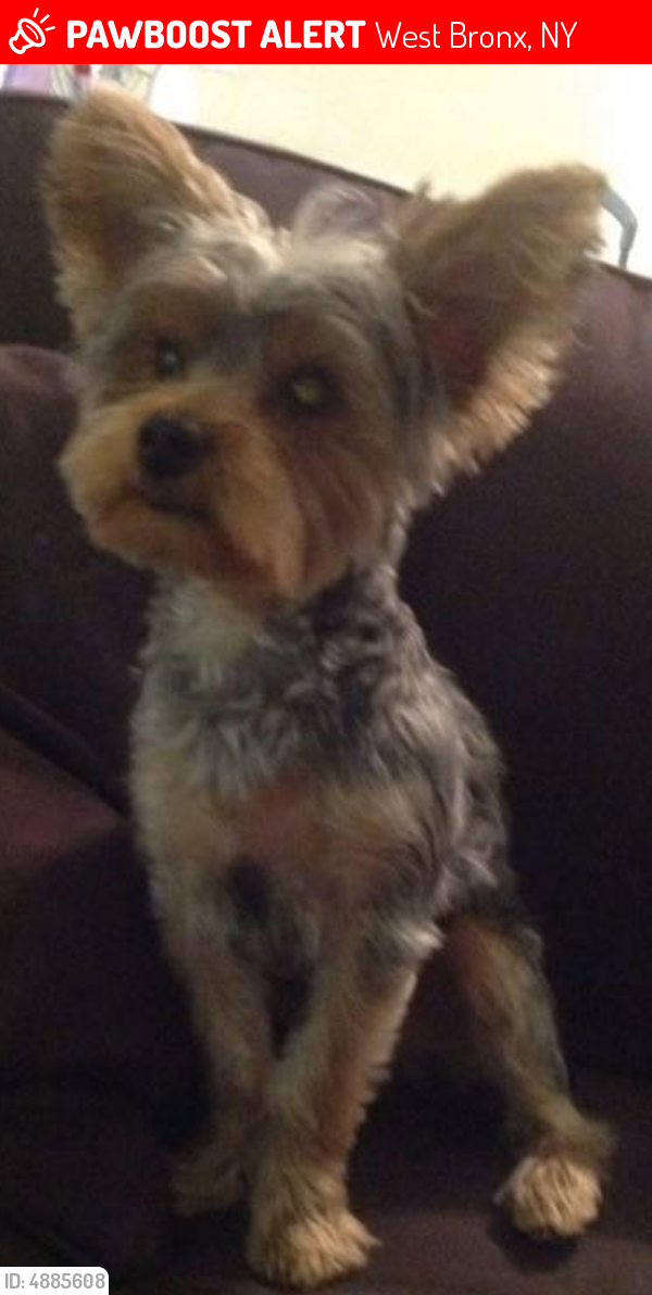 Lost Male Dog in West Bronx, NY 10455 Named Puppet (ID