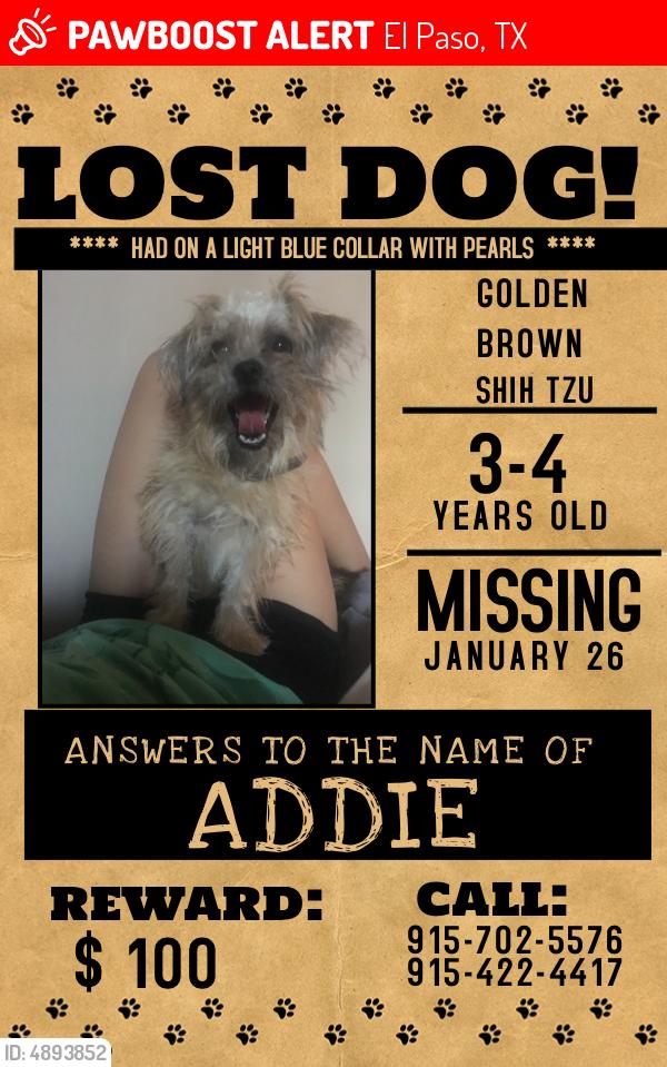 Lost Female Dog In El Paso Tx 79925 Named Addie Id 4893852