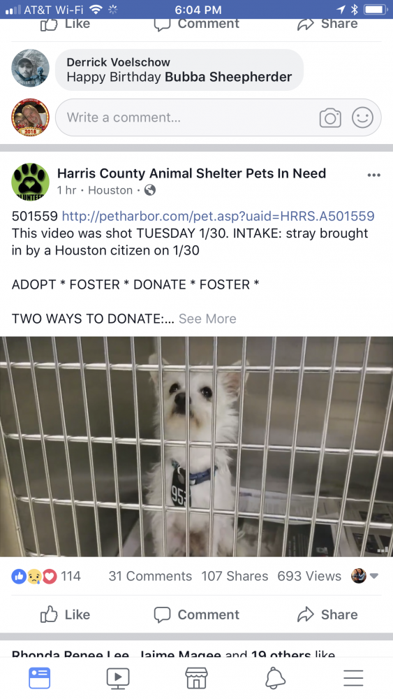Lost & Found Dogs, Cats, and Pets in Baytown, TX 77562 - Page 6