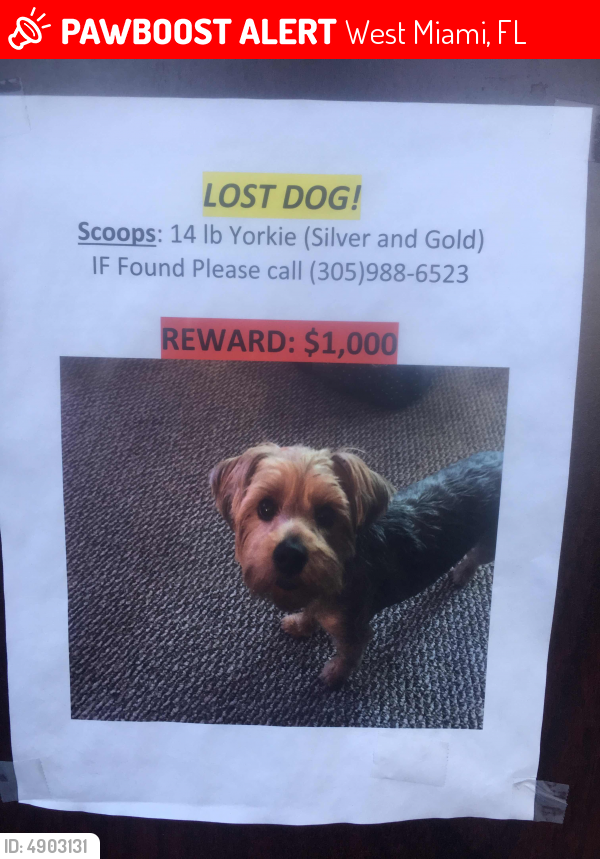 Lost Male Dog In West Miami Fl 33144 Named Scoop Id 4903131