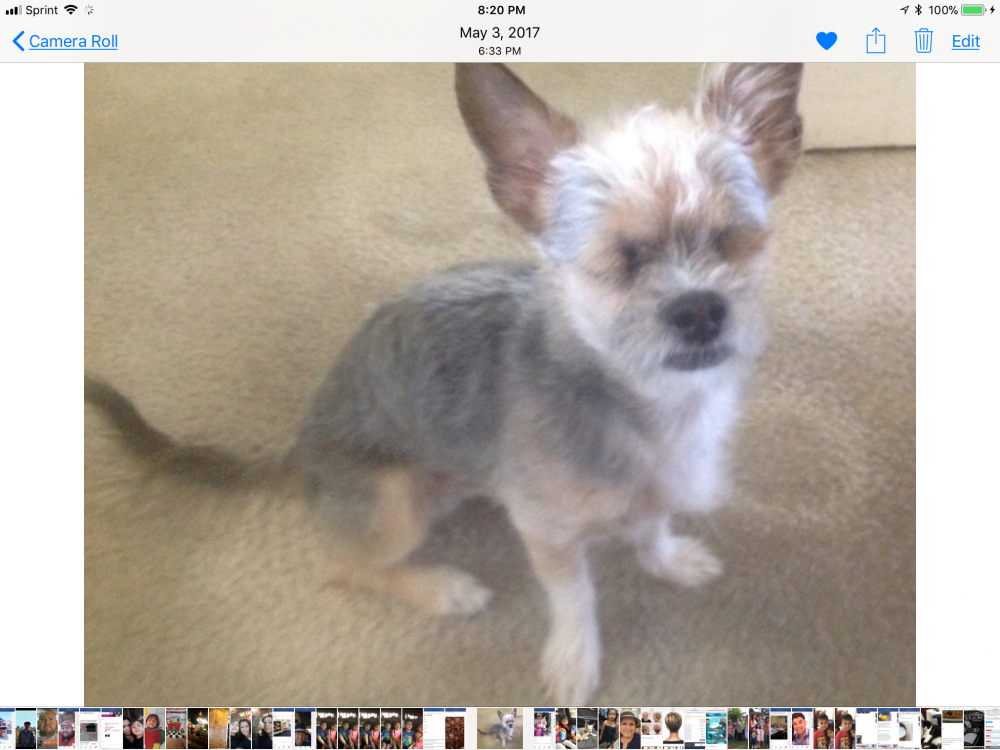 Lost Male Dog last seen Near W Kent Ave & S Toland St, Santa Ana, CA 92704