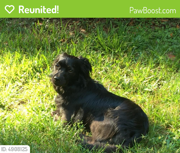 Reunited Female Dog last seen Near Charter Blvd & Water Tower Ct, Macon, GA 31210