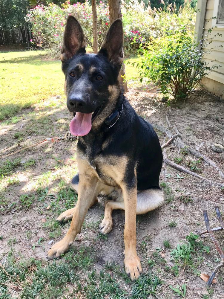 Lost Male Dog last seen Near Chandler Rd & Annie Chandler rd, Grayson, GA 30045