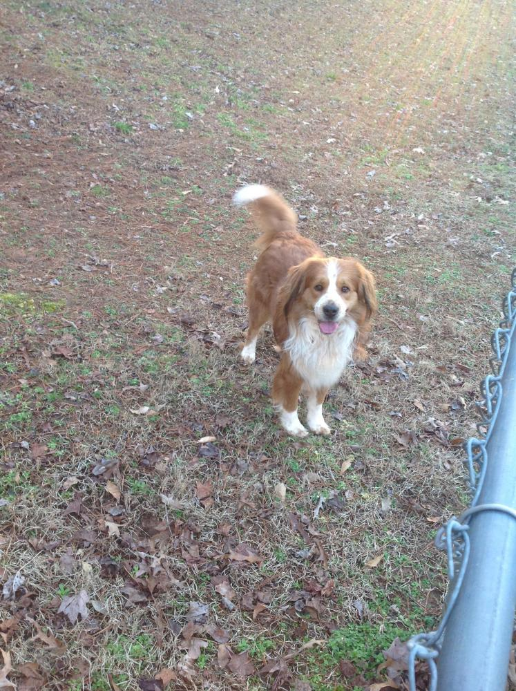 Found/Stray Male Dog last seen Near Edgefield Drive, Commerce, GA, USA, Commerce, GA 30529