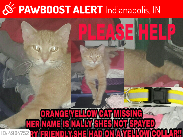 Lost Female Cat in Indianapolis, IN 46225 Named Nally (ID ...