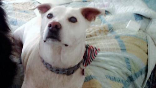 Lost Female Dog last seen Near NW 47th St & NW 99th Ter, Sunrise, FL 33351