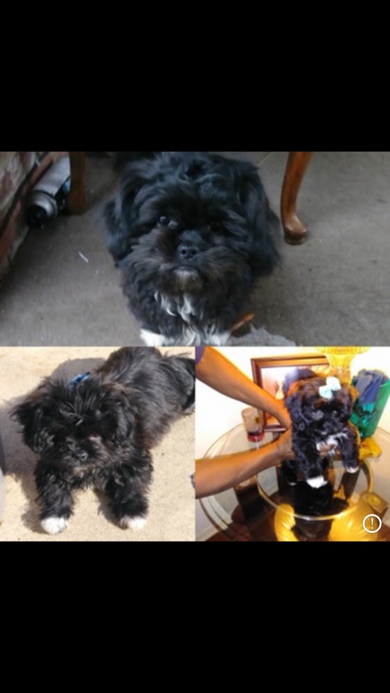 Lost & Found Dogs, Cats, and Pets in Memphis, TN 38133