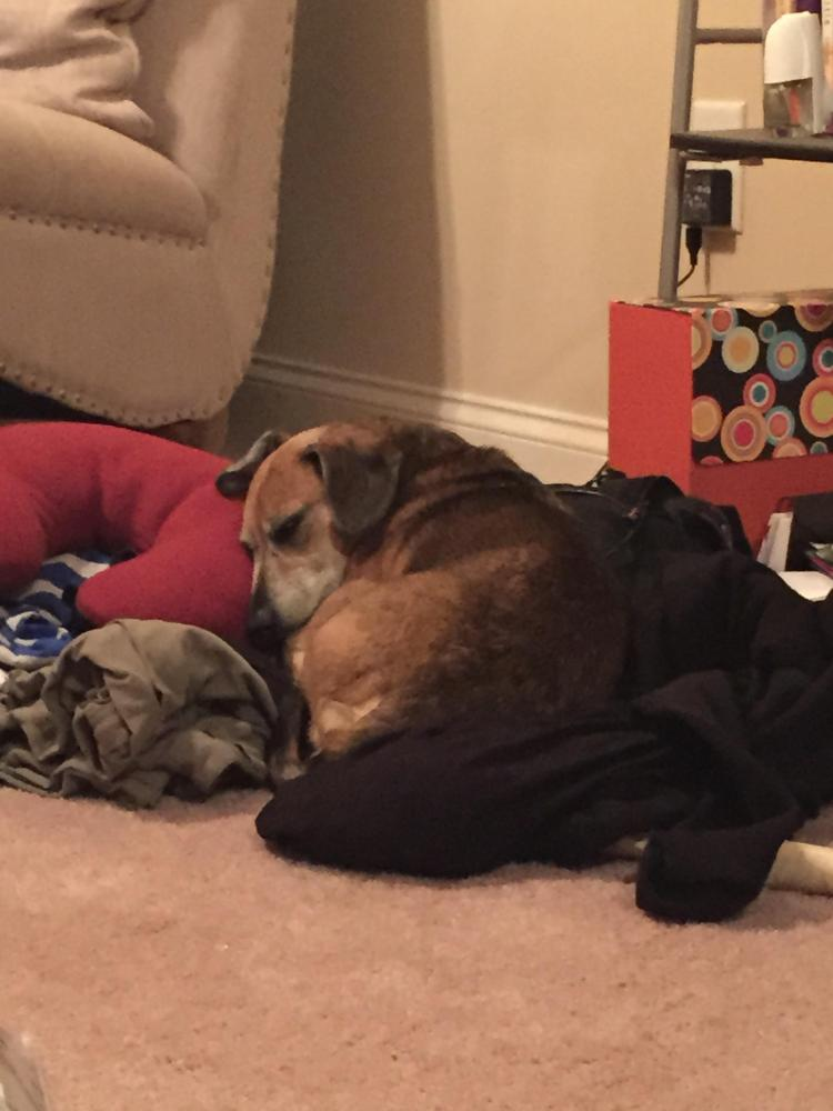 Lost Male Dog last seen Near Prince Ave & Putters Drive, Athens, GA 30603