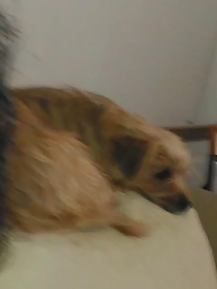 Lost Female Dog last seen Luther Adams Road Northwest, Monroe, GA, USA, Monroe, GA 30656