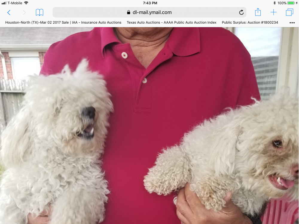 Lost & Found Dogs, Cats, and Pets in Houston, TX 77077
