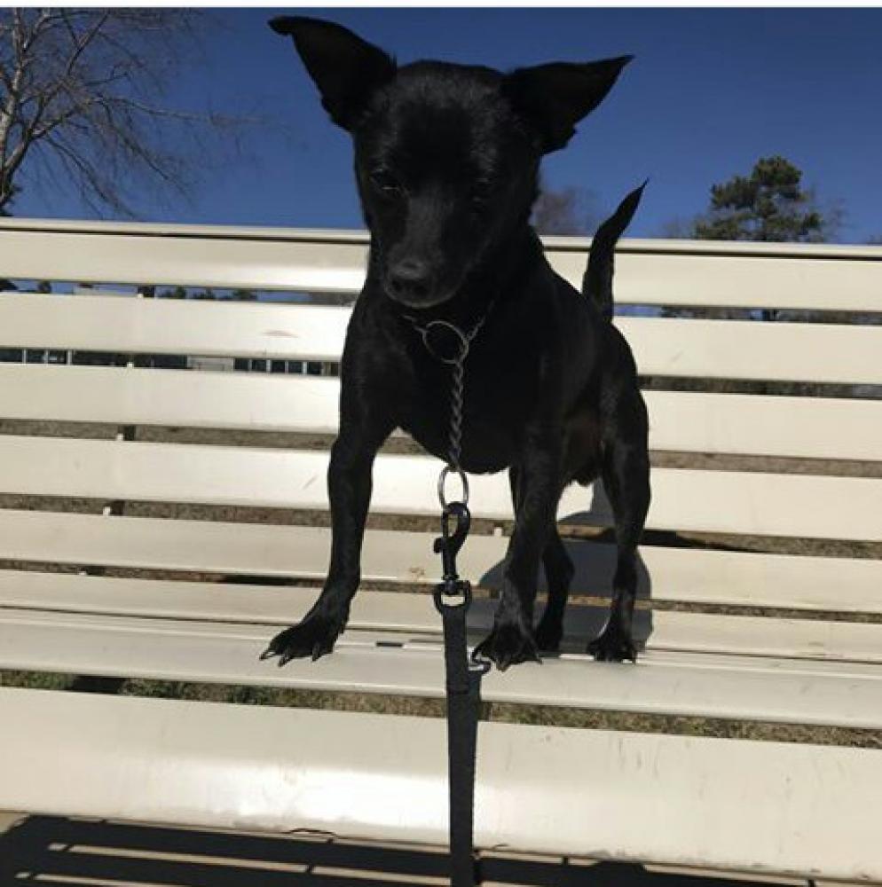 Lost Male Dog last seen Grayson Hwy, Lawrenceville ga 30045, Lawrenceville, GA 30046