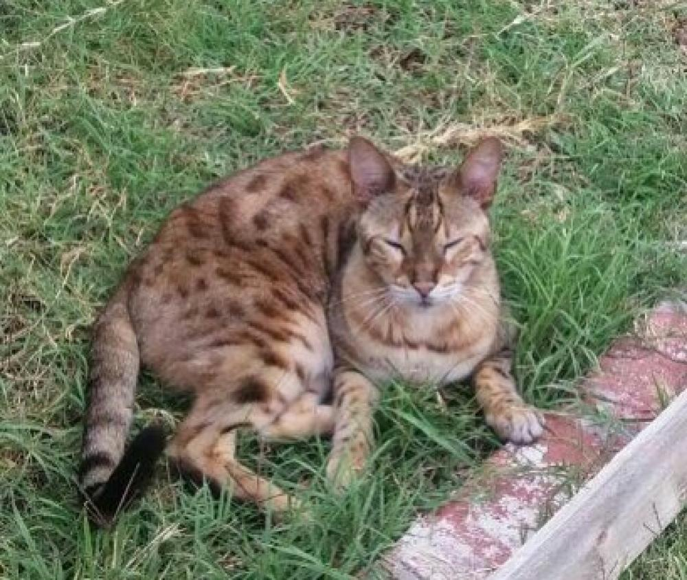 Lost Male Cat last seen Near Centralia St & Dunrobin Ave, Lakewood, CA 90713