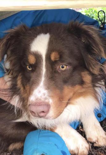 Lost Male Dog last seen Near Ed Bennett Rd, Nicholson, GA  30565, Nicholson, GA 30565