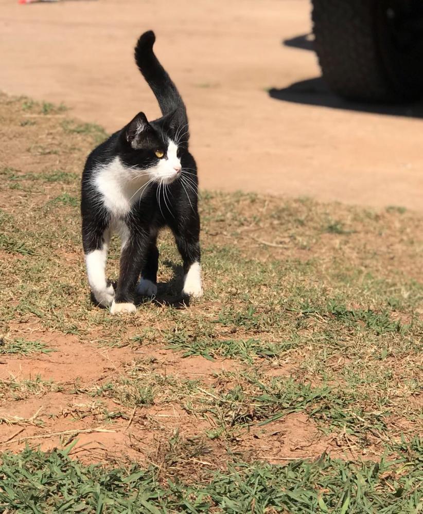 Lost Male Cat last seen Near A D Farmer Rd & State Rte 83, Good Hope, GA 30641