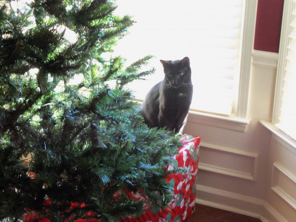 Lost Male Cat last seen Near Overwood Ln SW & Overwood Trce SW, Snellville, GA 30078