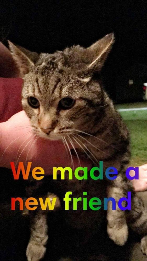 Found/Stray Unknown Cat last seen Near Pinecrest Dr & Morton, Athens, GA 30605