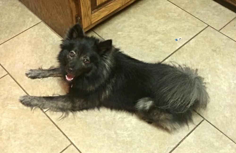 Lost Male Dog last seen Near Duck Rd & Cecil Clark Rd, Braselton, GA 30517