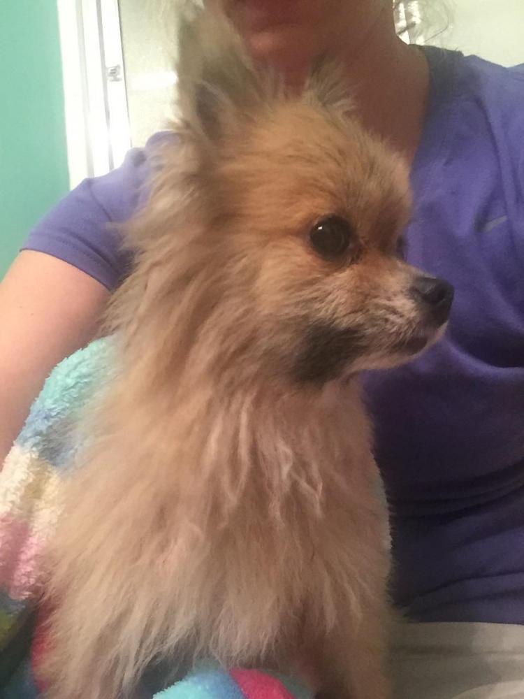 Found/Stray Male Dog last seen Near Mount Moriah Rd & Union Ct, Auburn, GA 30011