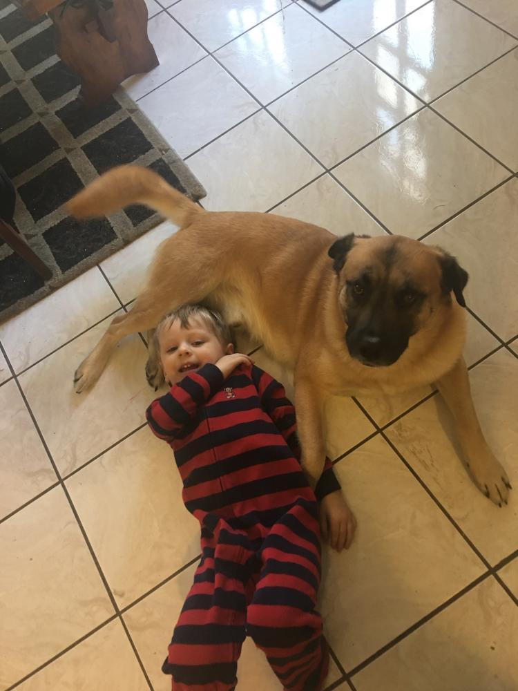 Lost Male Dog last seen Near N Sanga Rd & Walnut Grove Rd, Memphis, TN 38018