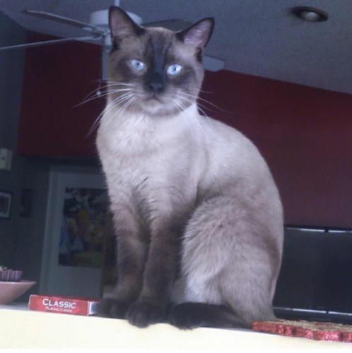 Lost Male Cat last seen Near NW 15th St & US Hwy 441, Margate, FL 33063