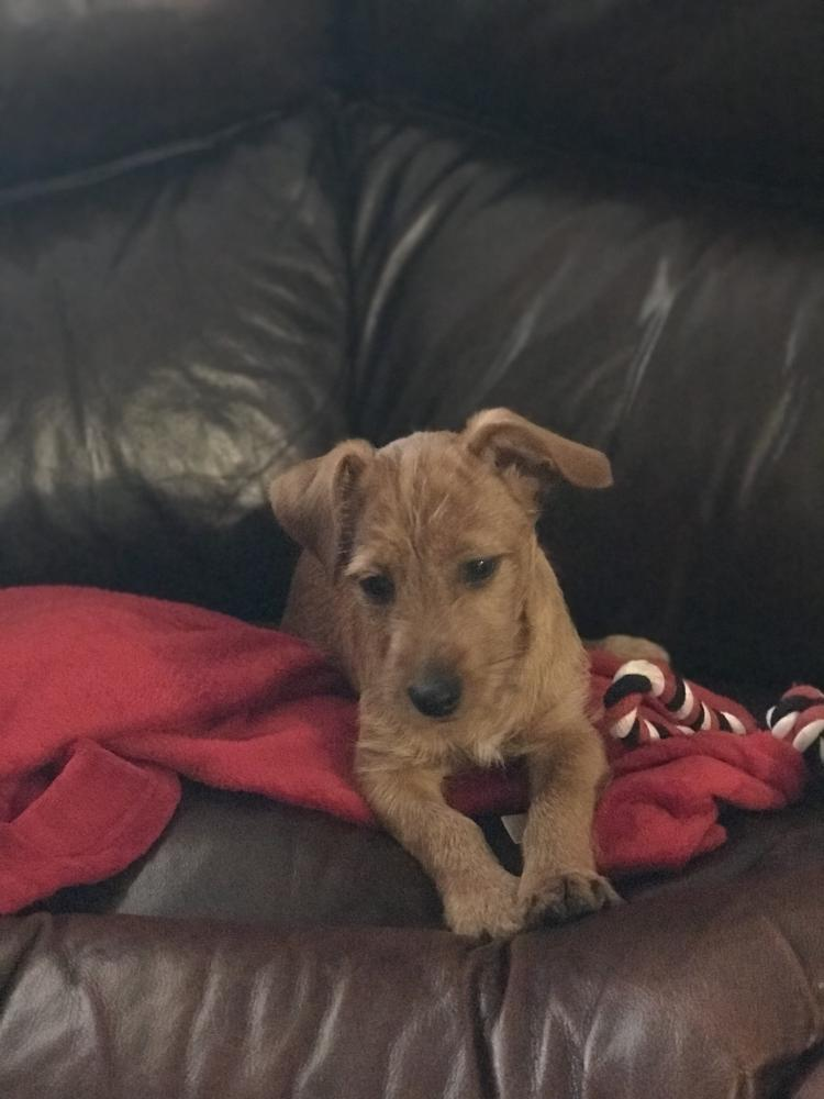 Found/Stray Male Dog last seen Near Pines Blvd Pembroke Pines, FL  33029 United States, Pembroke Pines, FL 33029