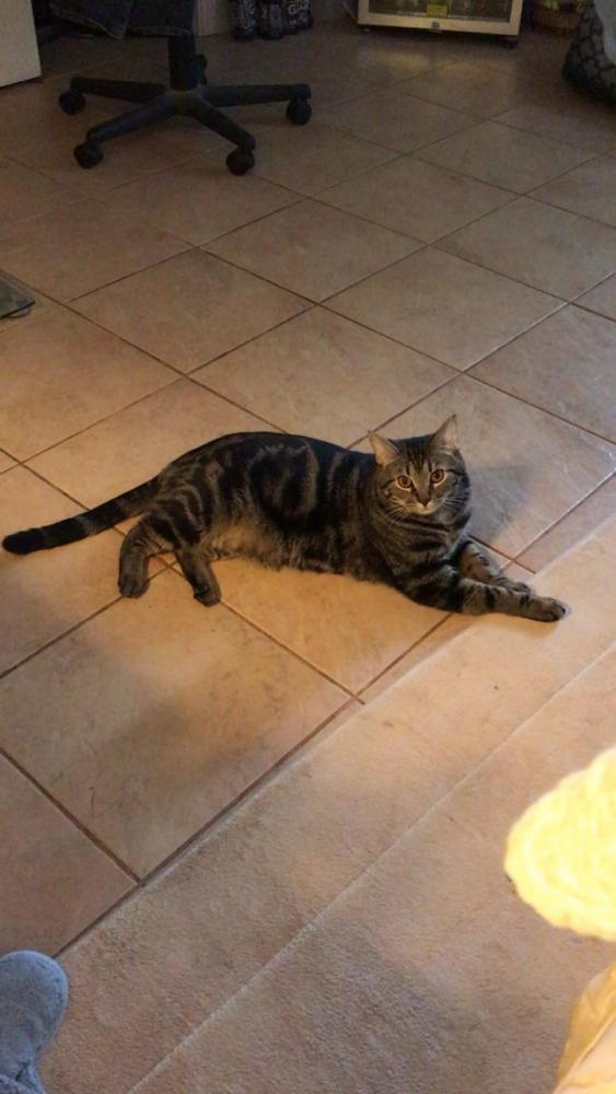 Lost Male Cat last seen Near Cross Creek Pl & Woodlake Pl, Athens, GA 30605