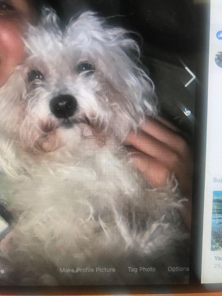 Lost Male Dog last seen Near Southwest 6th Avenue, Hallandale Beach, FL, USA, Hallandale Beach, FL 33009