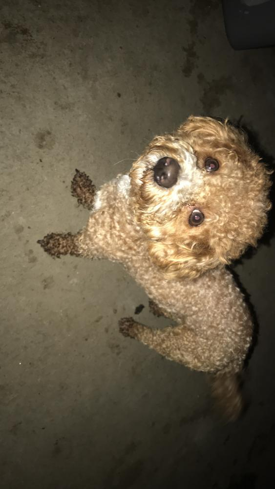 Found/Stray Male Dog last seen Near Downey Ave & Firestone , Downey, CA 90242