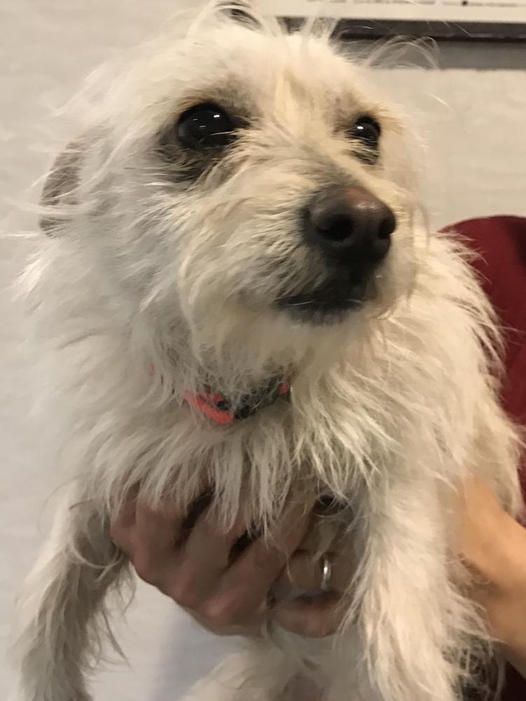 Found/Stray Male Dog last seen Near N 31st St E & Orchard St, Wichita, KS 67214