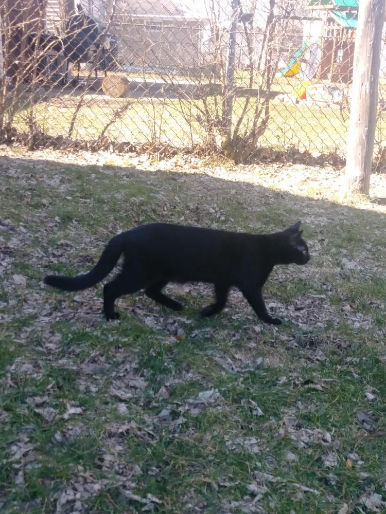 Lost Female Cat last seen Near Miami St & Indiana St, South Bend, IN 46614