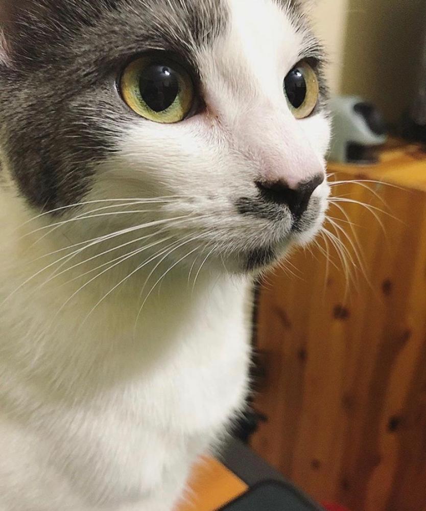 Lost Female Cat last seen Near Miles Ave & Balcom Ave, Throgs Neck, NY 10465