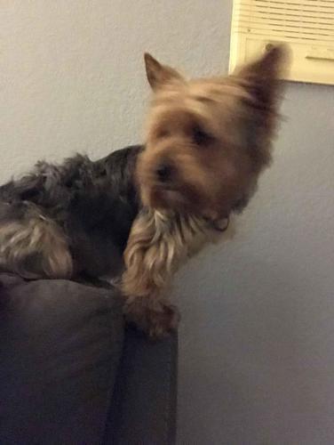 Lost Male Dog last seen Near Via Vista Dr & Corinthian Way, Riverside, CA 92506