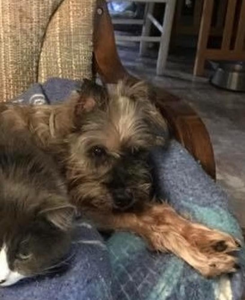 Lost Male Dog last seen on Gass, Overland, MO 63114