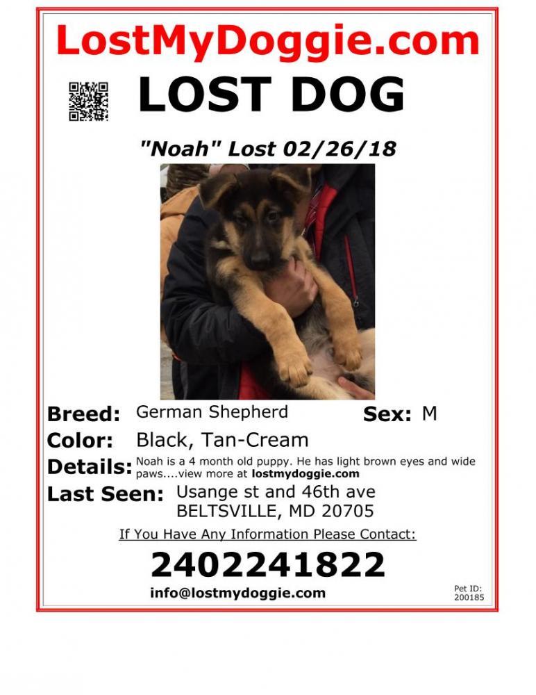 Lost Male Dog last seen Near Baltimore Ave & Manheim Ave, Beltsville, MD 20705