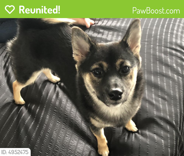 Reunited Female Dog last seen Yoakum Parkway, Alexandria, VA, USA, Alexandria, VA 22304