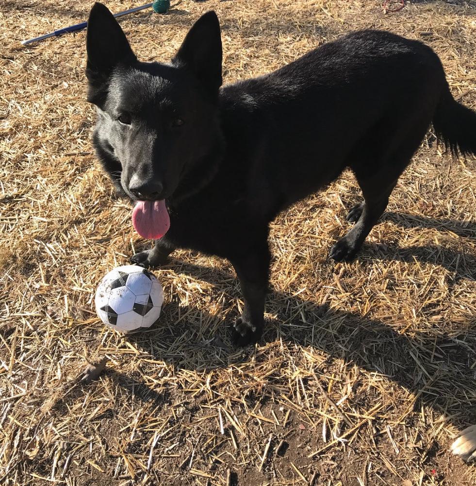 Lost Male Dog last seen Doris Dr & Allentown Rd, Fort Washington, MD 20744