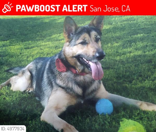 lost female dog in san jose ca 95112 named harley lynn id 4977934