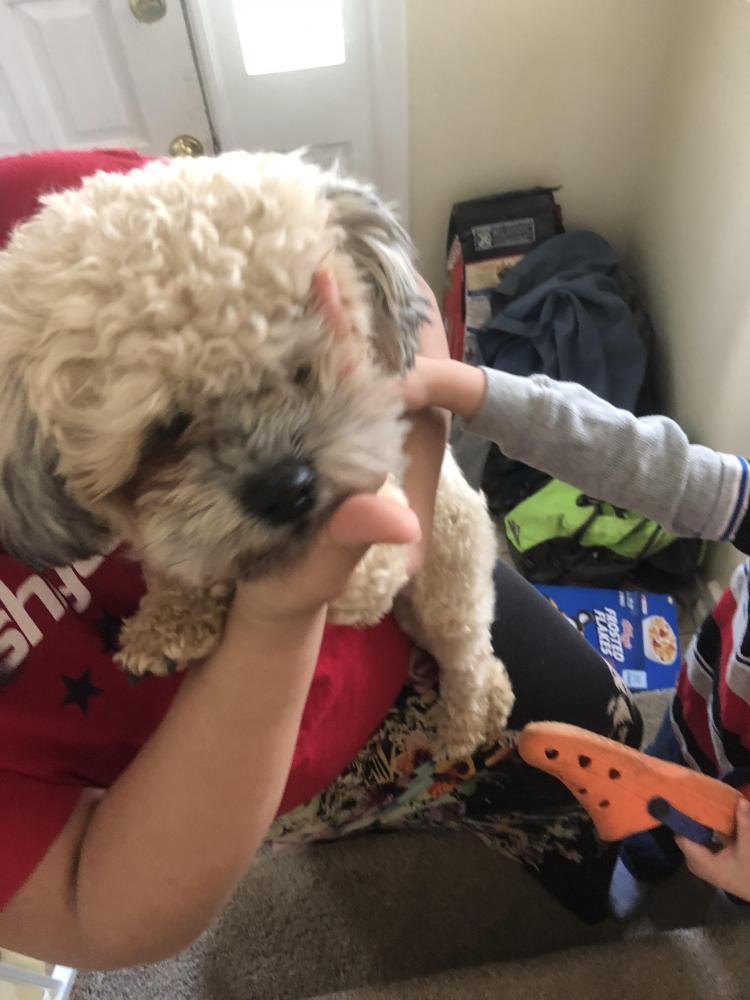 Found/Stray Male Dog last seen Near Evergreen Dr & Eldorado Dr, Woodbridge, VA 22193