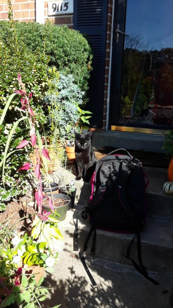 Lost Male Cat last seen Near Glenville Rd & Pickwick Village Ter, Silver Spring, MD 20901