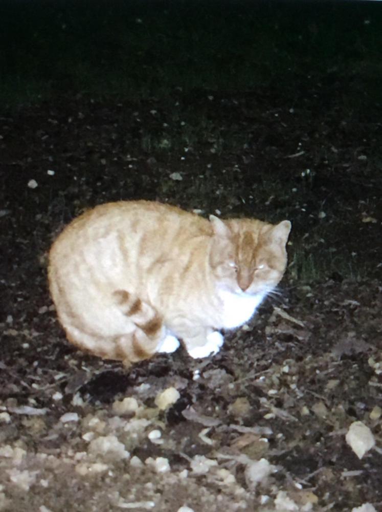 Found/Stray Unknown Cat last seen Near Flourtown Rd & Franklin Way, Lafayette Hill, PA 19444