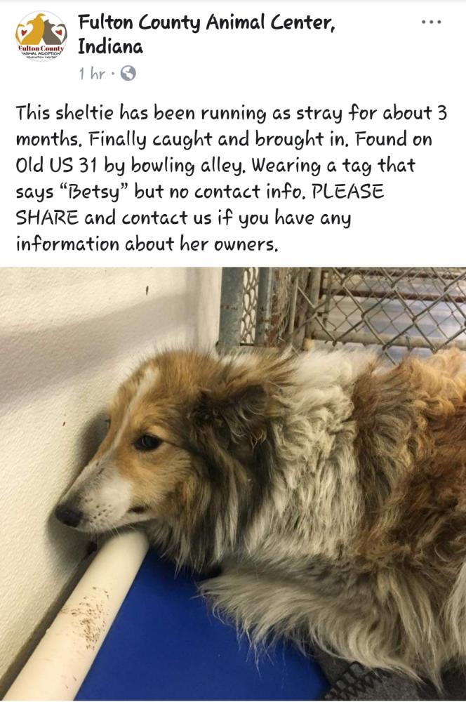 Lost & Found Dogs, Cats, and Pets in Indiana 46960 - Page 1