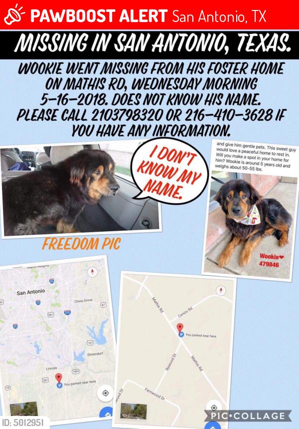 Lost Male Dog In San Antonio Tx 78264 Named Wookie Id 5012951