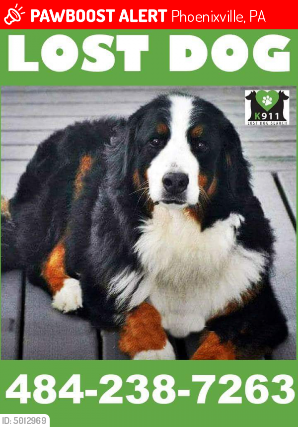 Lost Male Dog In Phoenixville Pa 19460 Named Boomer Id 5012969