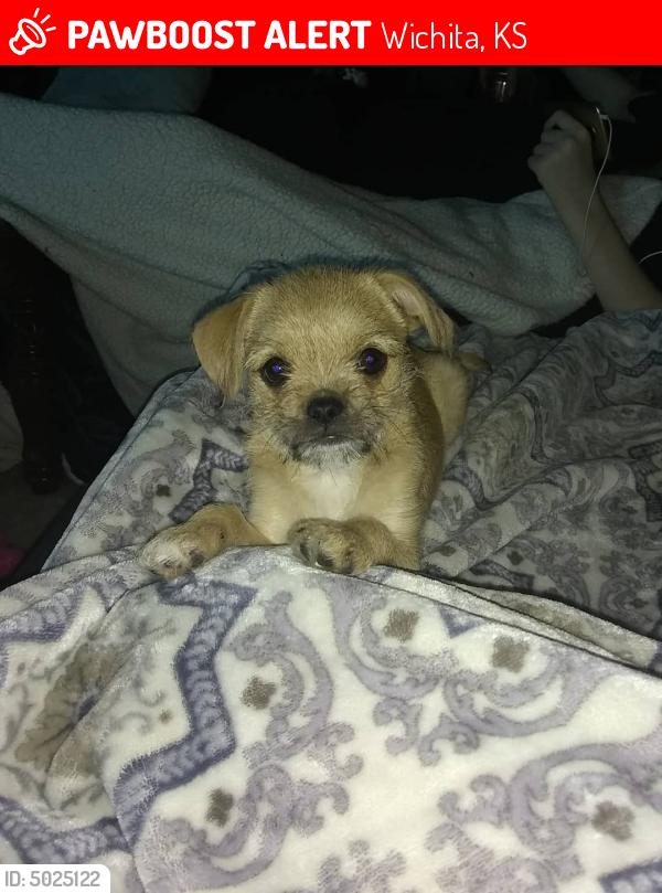 Lost Female Dog in Wichita, KS 67212 Named Pugsley (ID ...