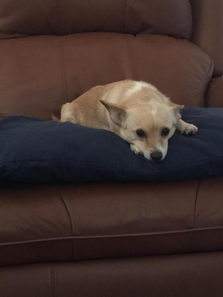 Lost Female Dog last seen Near Artemia Way & Parkside Ave, San Diego, CA 92139