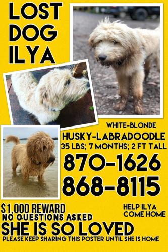 Lost Female Dog last seen Near Olinda Road, Makawao, HI, USA, Makawao, HI 96768