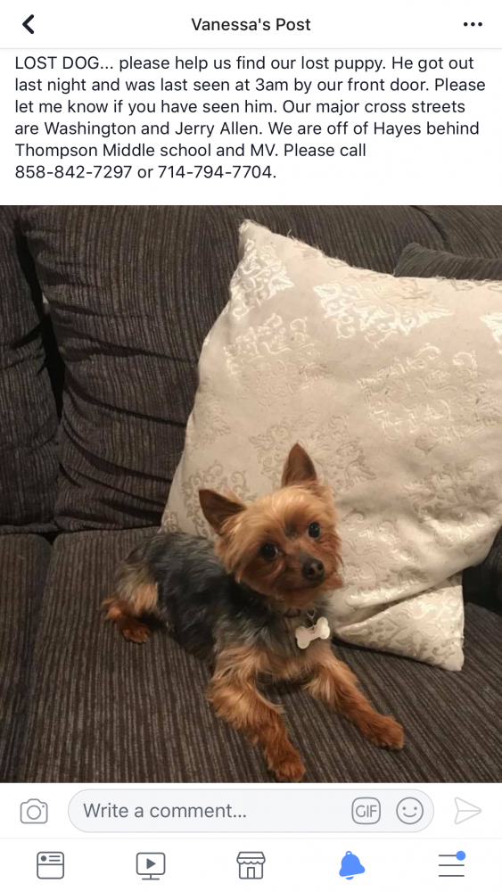Lost & Found Dogs, Cats, and Pets in Perris, CA 92585 - Page 2