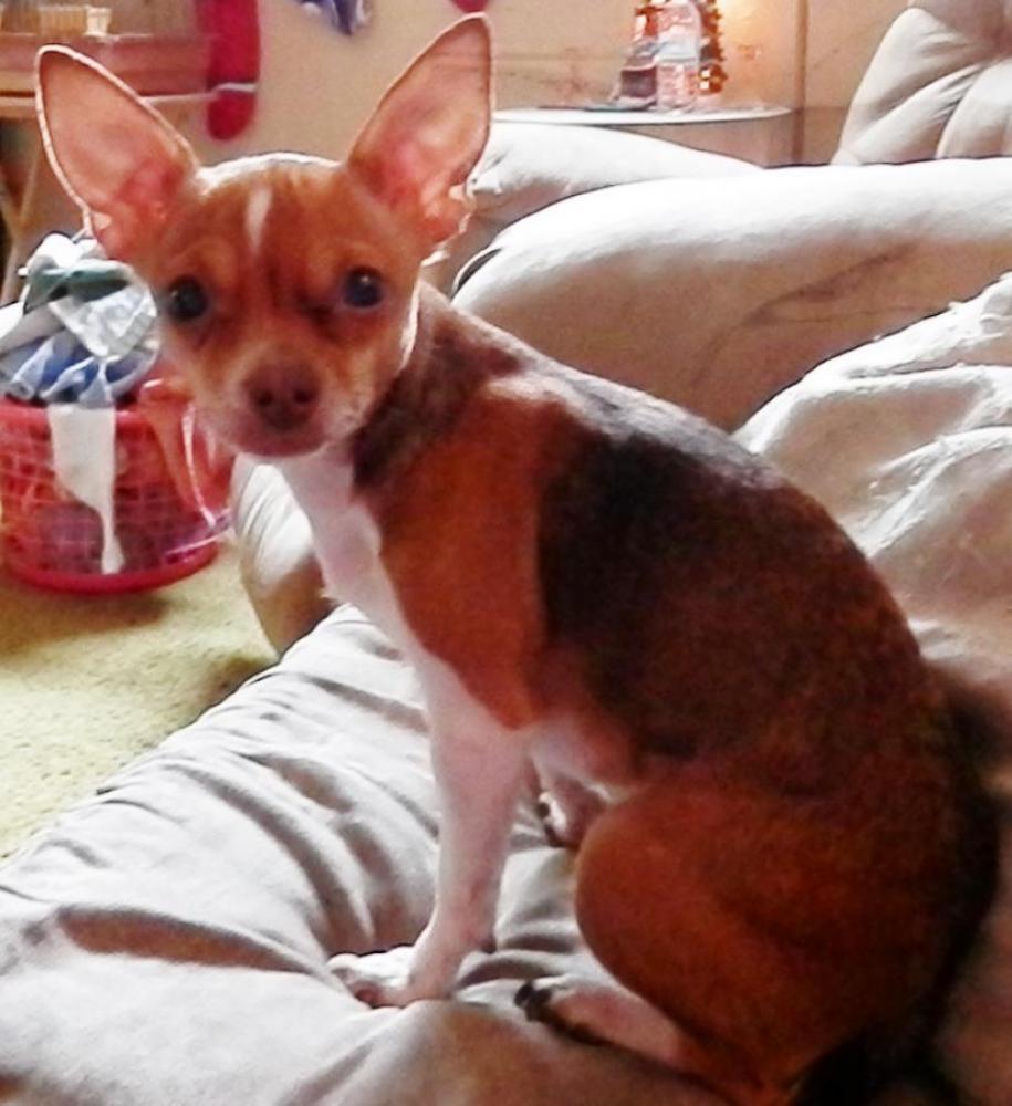 Lost Female Dog last seen Near Funston St & S 61st Ave, Hollywood, FL 33023